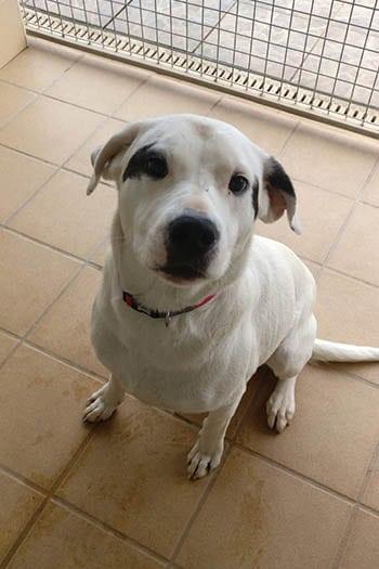 Tia female dog