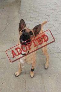 Lina adopted