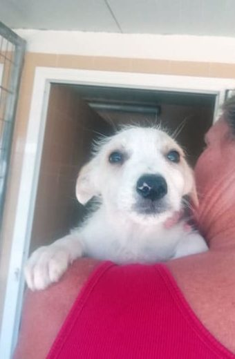 Arlo – male puppy seeks home