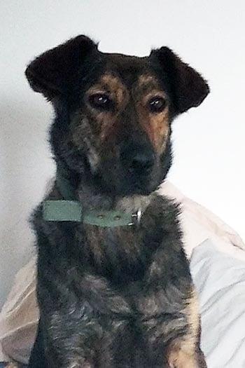 Lucas está en el refugio con su hermano y hermanas. Está acostumbrado a la vida familiar, vive con perros y es amigable. ¡Busquemos un hogar para este chico!