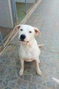 Lucas - perro macho amigable busca hogar
