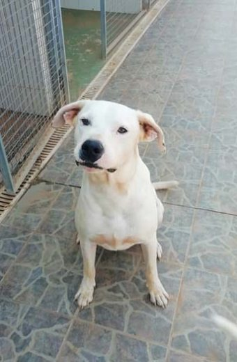 Lucas – friendly male dog seeks home