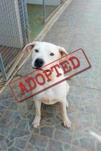 Lucas adoptó