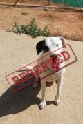 RESERVADO: Quinny - perra amigable busca hogar