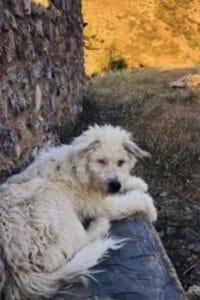 Monty male dog seeks home