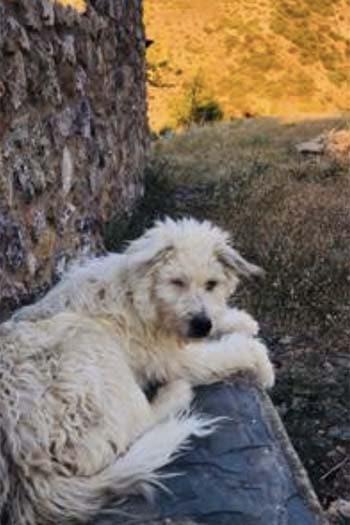 Perro macho Monty busca casa