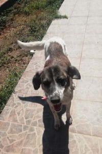 Cleo female dog up for adoption