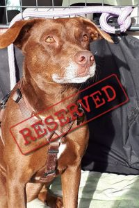 Tuca reserved