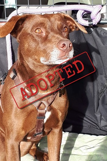 tuca adopted