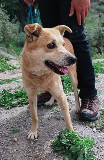 Tessa – female Terrier mix