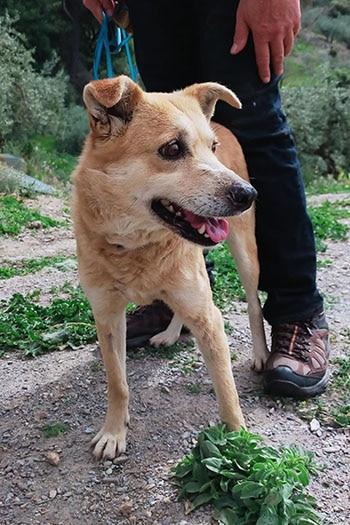 Mezcla de tessa hembra Terrier