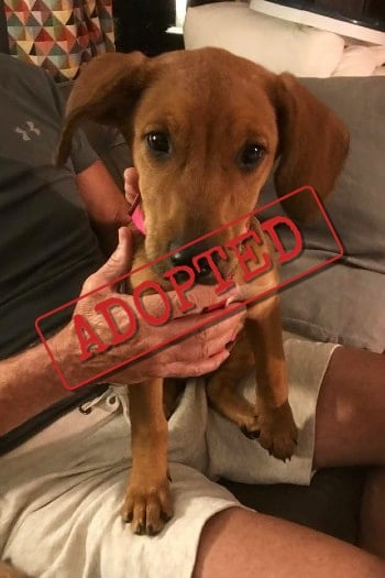 Missy female dog adopted in Spain