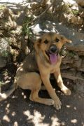 Noah – friendly young dog looking for a home