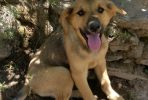 Noah, friendly male puppy