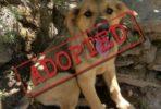 Adoptado: Noah, simpático cachorro macho