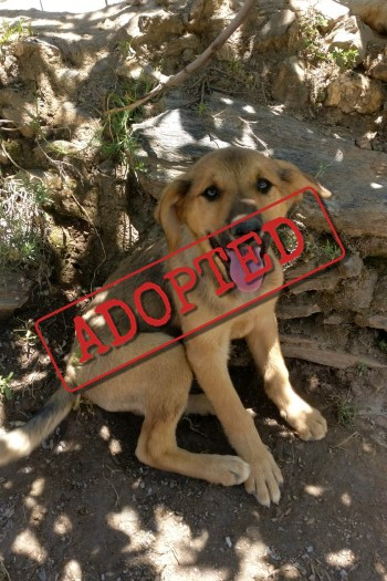 Adopted: Noah, friendly male puppy
