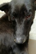 Vida – a special girl in need of a special home