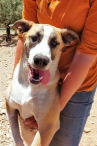 Mordisco, affectionate young male dog for adoption