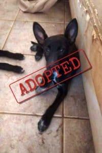 Adoptado, Lupe cachorro cruzado Border Collie Podenco hembra