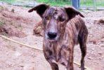 Tara gentil perra busca un hogar tranquilo