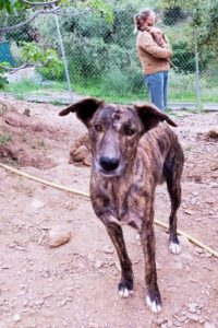 Tara gentle female dog seeks quiet home