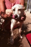 Bibi – young female dog looking for a home