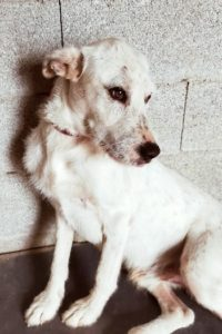Boomer, young male dog for adoption