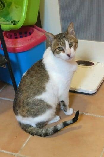 Merlín, gato macho adulto busca casa