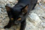 Carrie, black kitten. Female.