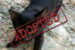 Corrie adopted