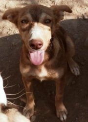 Lola 10