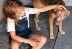 Lola, perra busca hogar para siempre