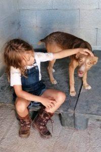 Lola, female dog seeks forever home
