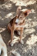 ADOPT: Lola- young female dog seeks forever home