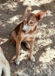 Lola 8