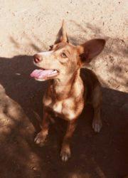 Lola 9