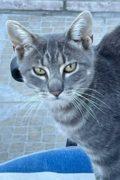 Monty - hermoso gato macho