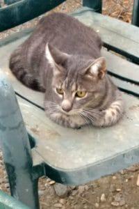 Monty, male cat seeks home