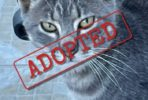 Monty adopted