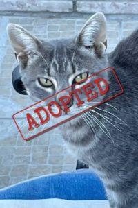 Monty adoptó